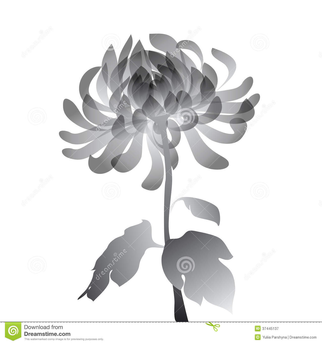 Black Flower White Background Royalty Free Stock graphy Image 3744