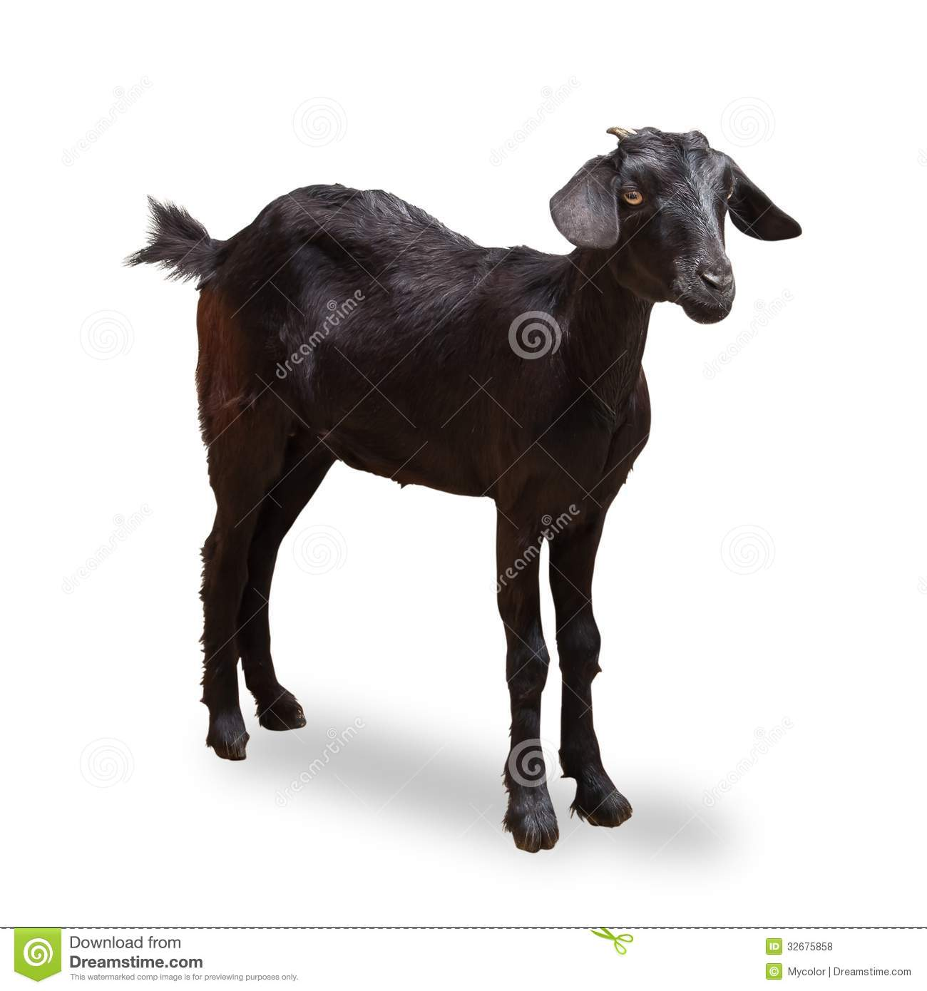 Black Goat Royalty Free Stock Photos - Image: 32675858