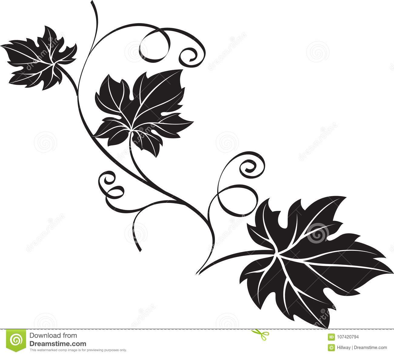 Black Grape Branch With Leaves On White Background Stock Vector Illustration Of Design Fruit 107420794