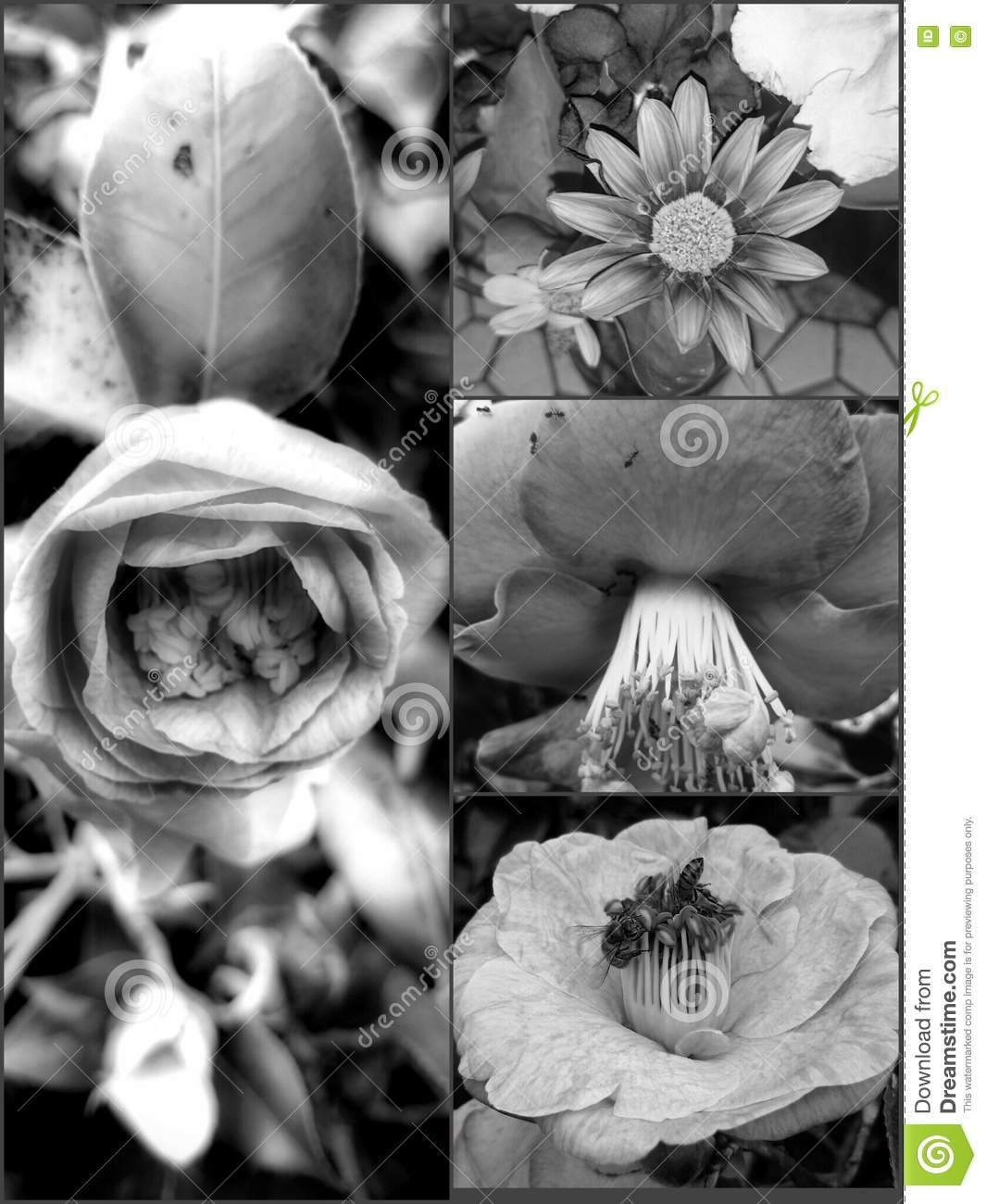 Black And Grey Floral Wallpaper Stock Image Image Of Floral