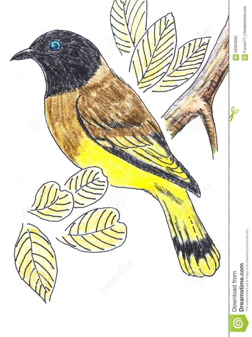 Black-headed Bulbul Bird Drawing Stock Illustration - Illustration Of Drawing Illustration ...