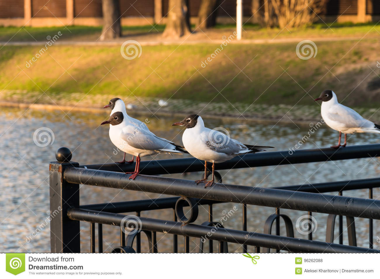 Black-headed gulls are sitting on the railing