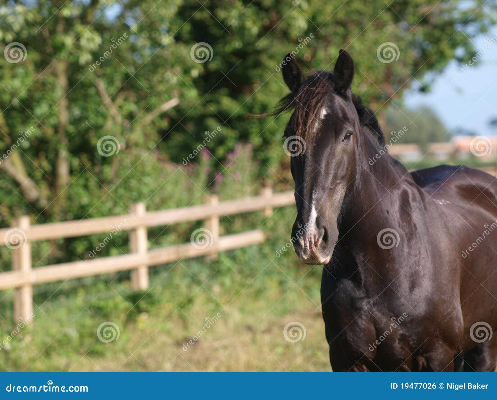 black a horse has - photo #39