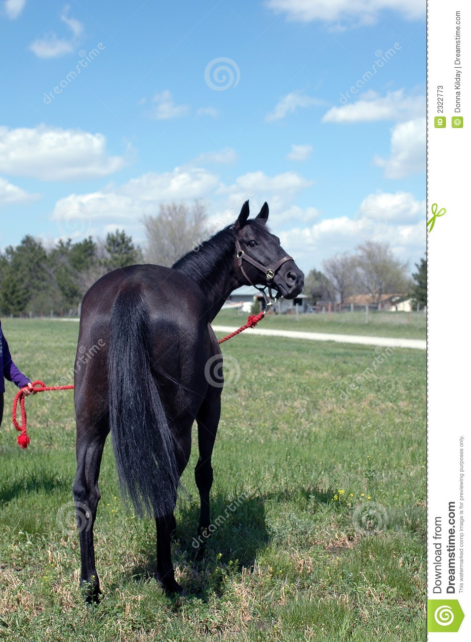 Black Horse Stock Photos Image 2322773