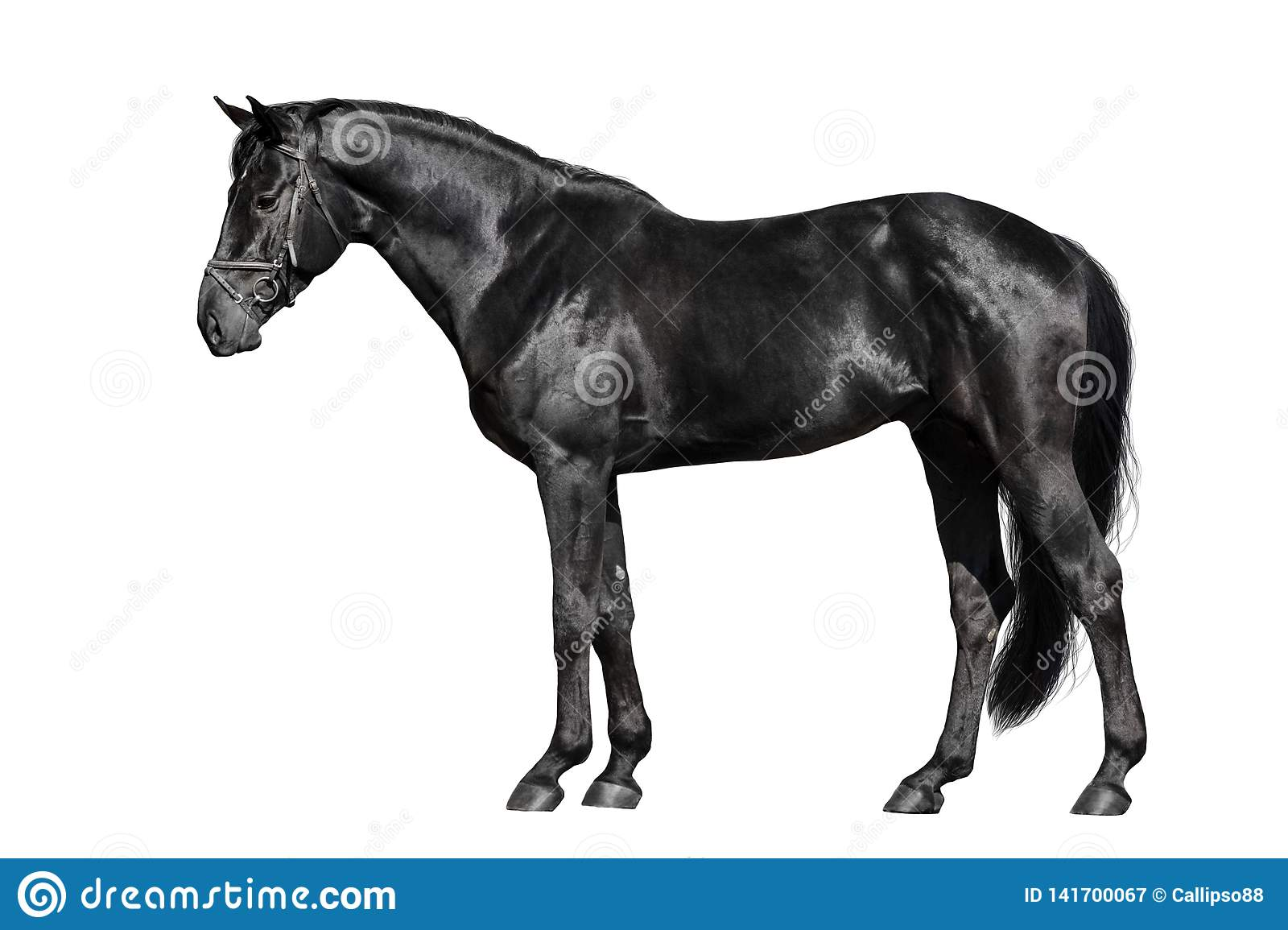 Black Horse Exterior Stock Image Image Of Standing 141700067