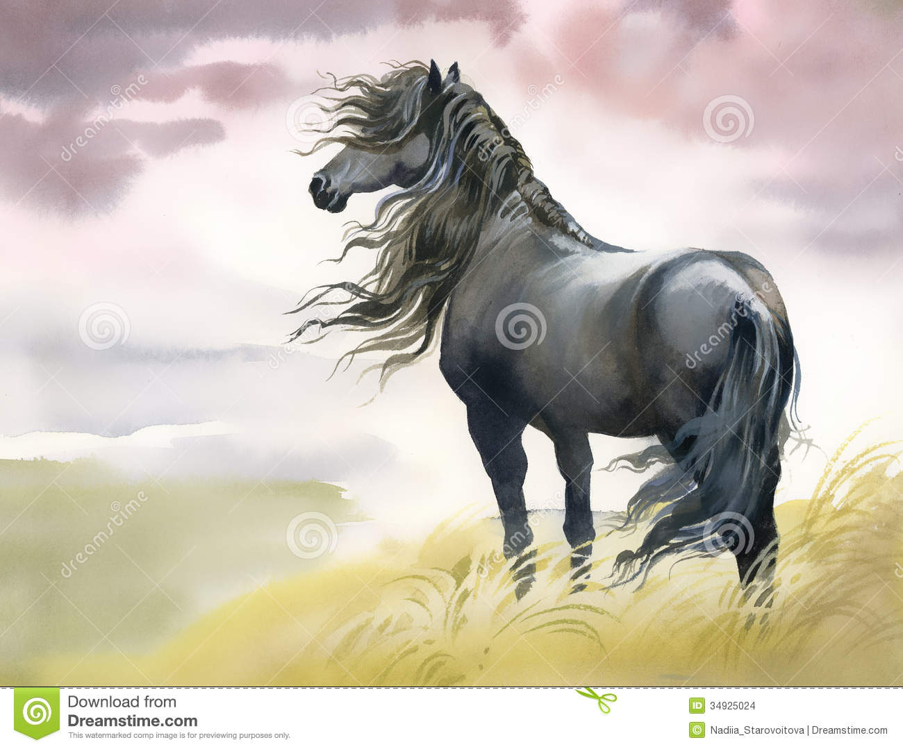 Black Horse In A Field Stock Images Image 34925024