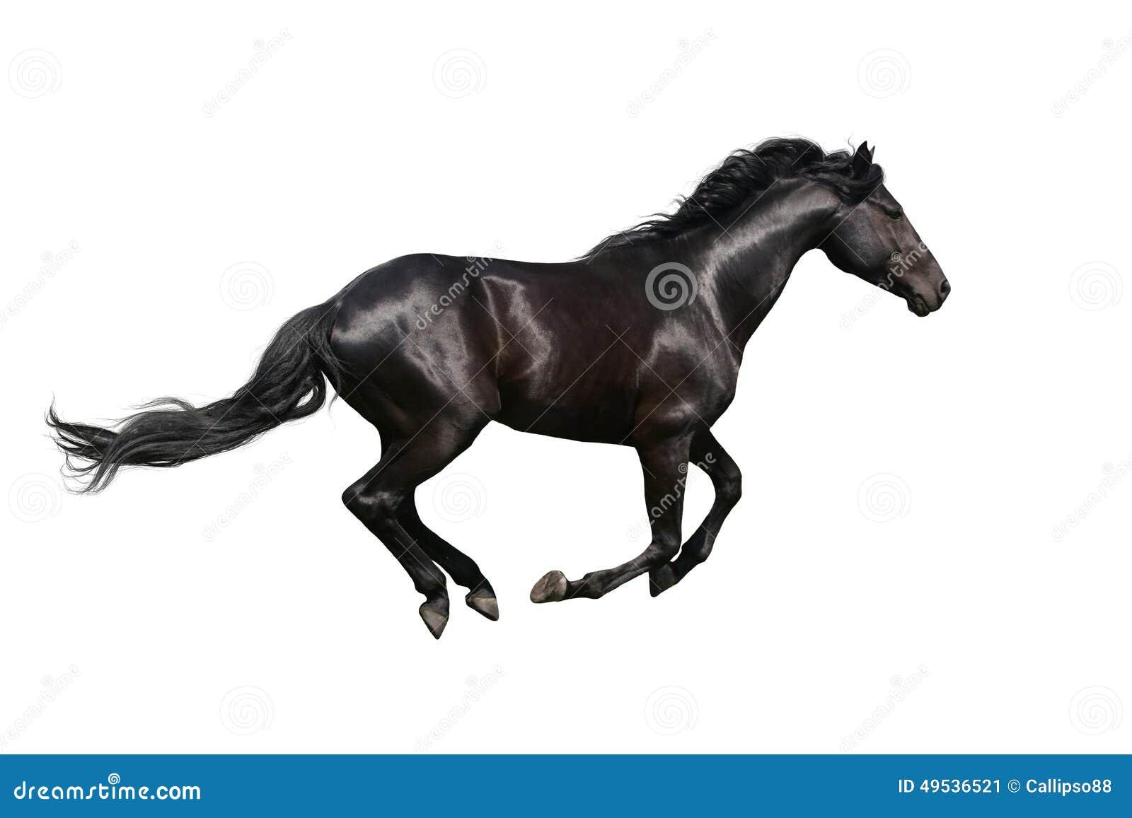 caballo black singles Cast one-piece concave multi-spoke five lug wheel.