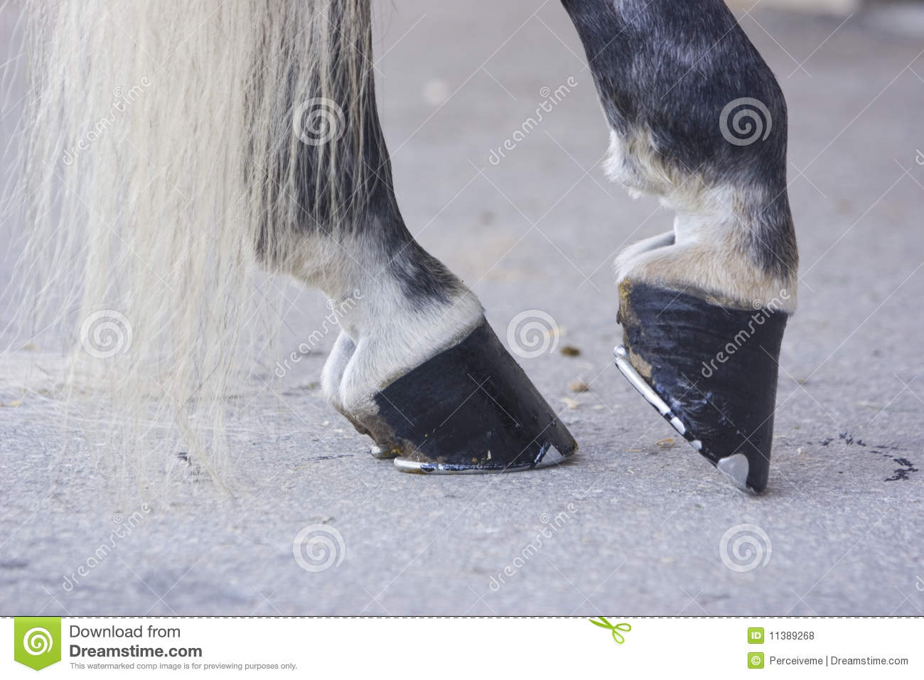 Black Horse Hooves Royalty Free Stock Photos - Image: 11389268