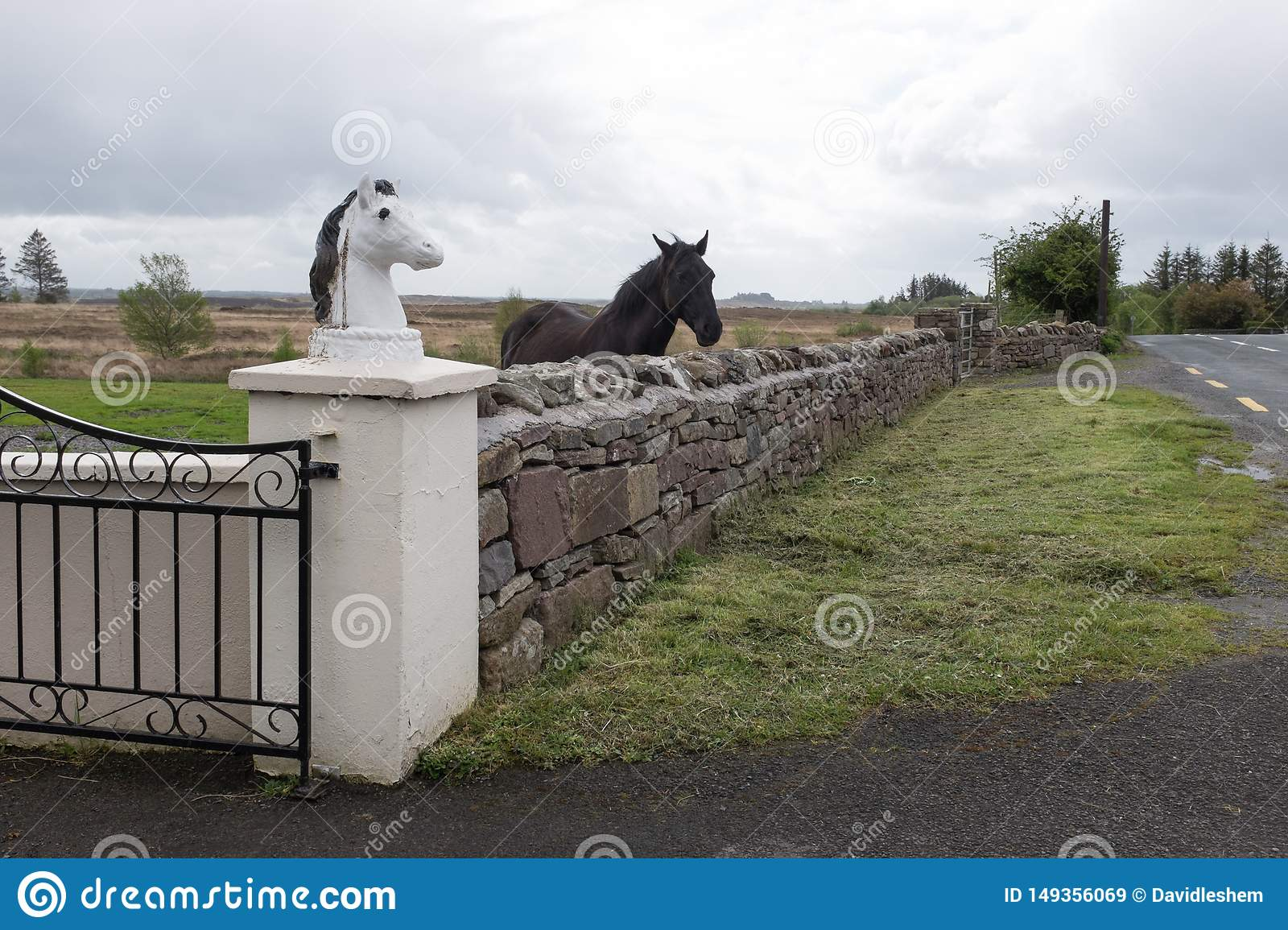1 602 Horse Humor Photos Free Royalty Free Stock Photos From Dreamstime