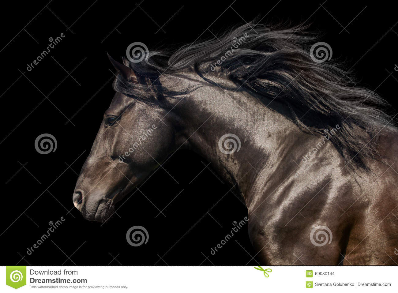 long manes stock photos - photo #25
