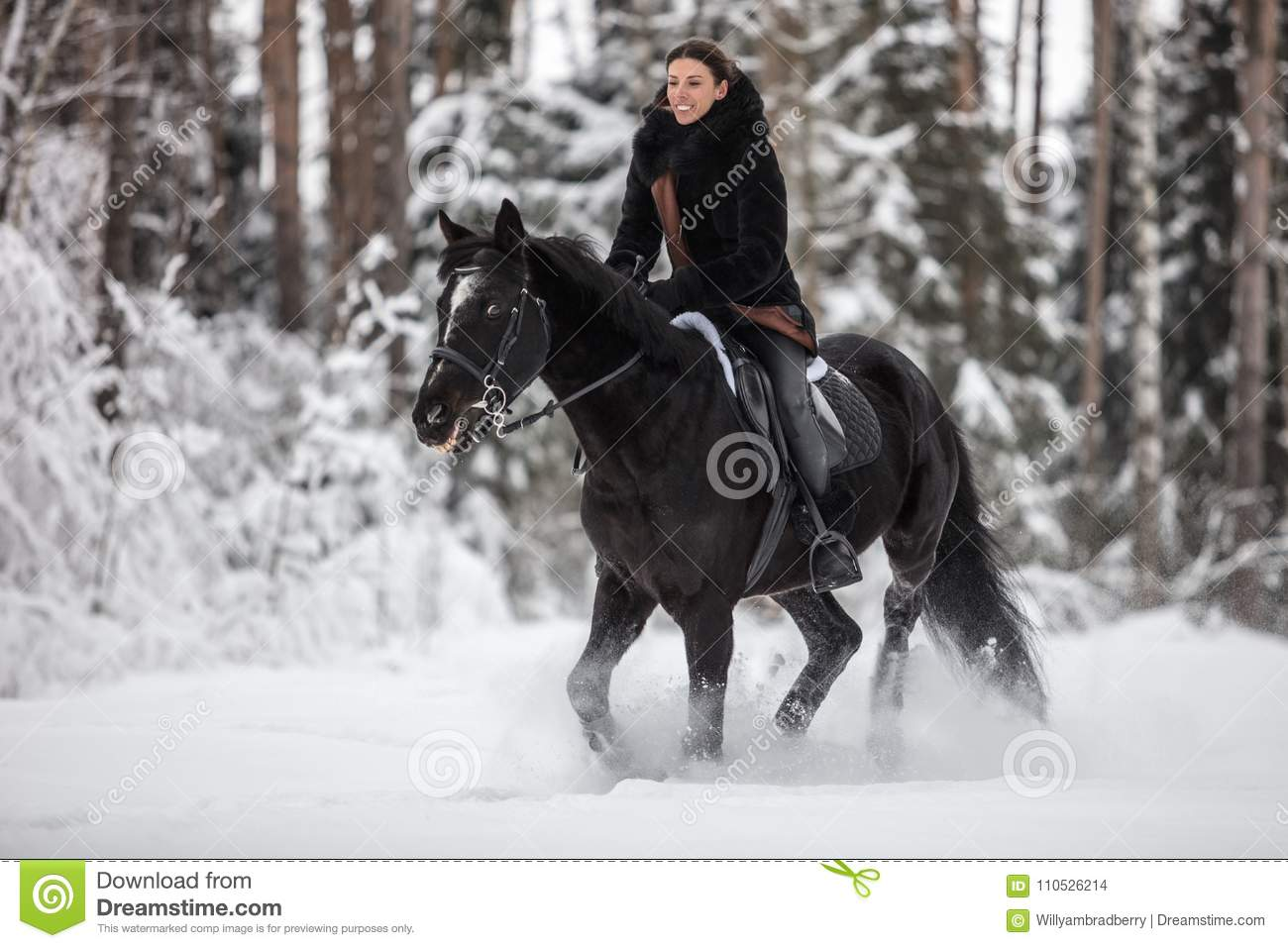 Black Horse Running In Snow On Winter Background Stock Photo Image Of Snow Horse 110526214