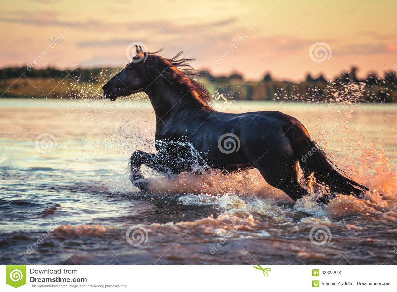 1 901 Horse Running Water Photos Free Royalty Free Stock Photos From Dreamstime