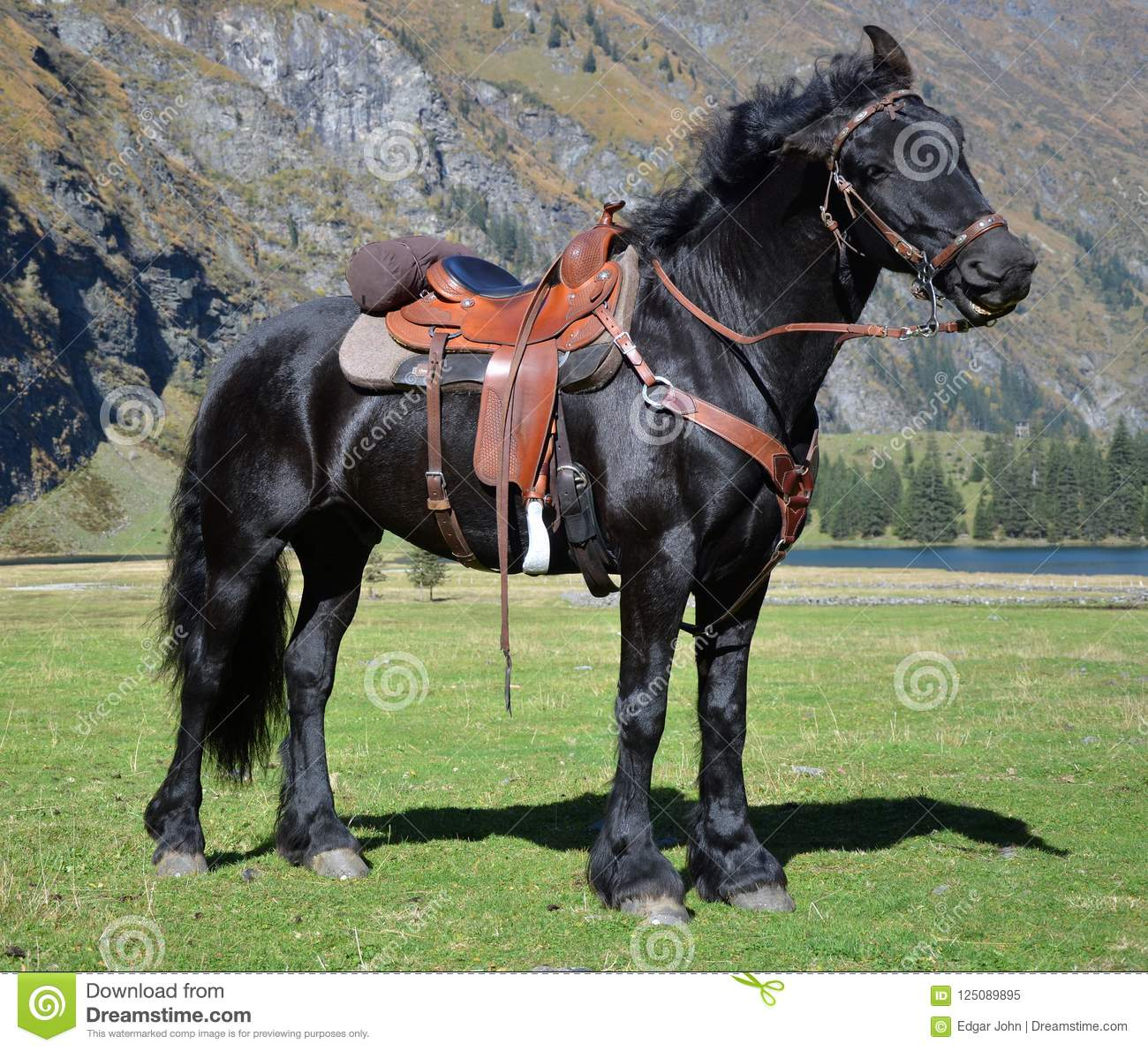 Black Horse With Saddle With Mountains And Lake Stock Image Image Of Military Beautiful 125089895