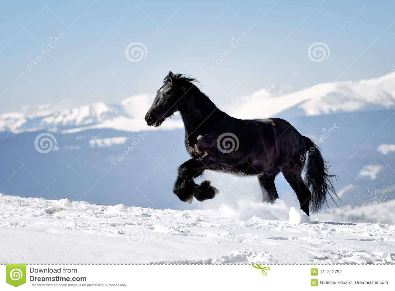 Black Horse in the winter time with mountains in the background
