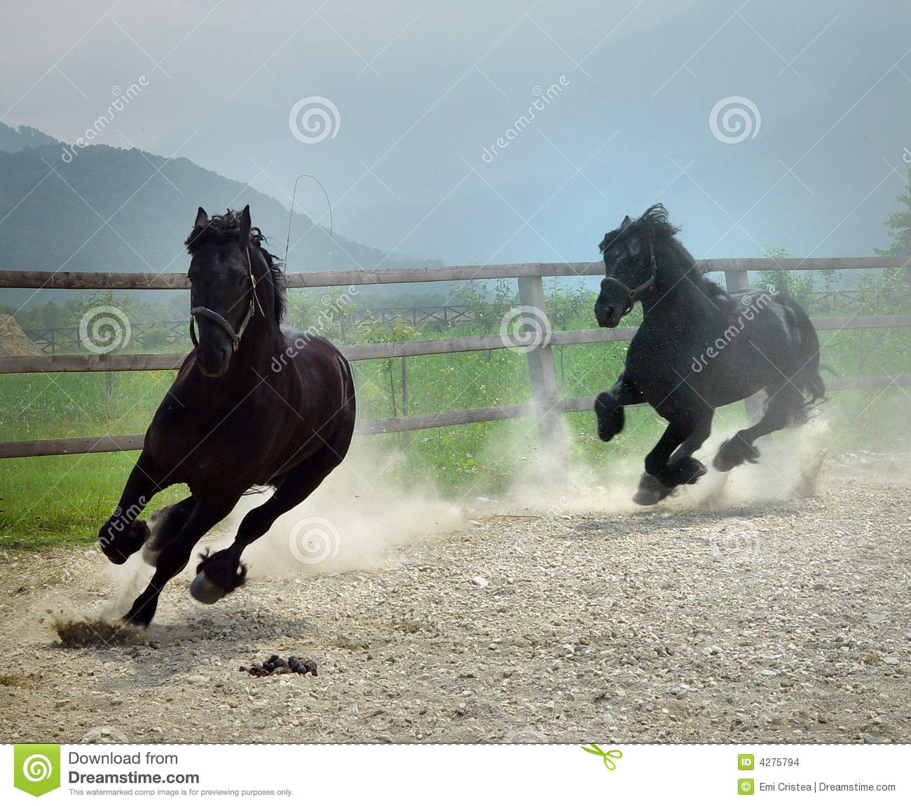 black horses running stock images image 4275794