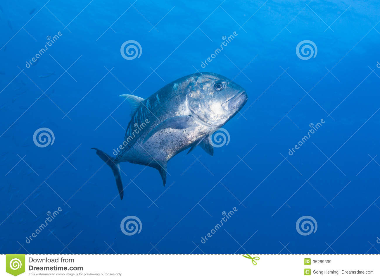 Black jack fish stock image image of blue indonesia for What is a jack fish