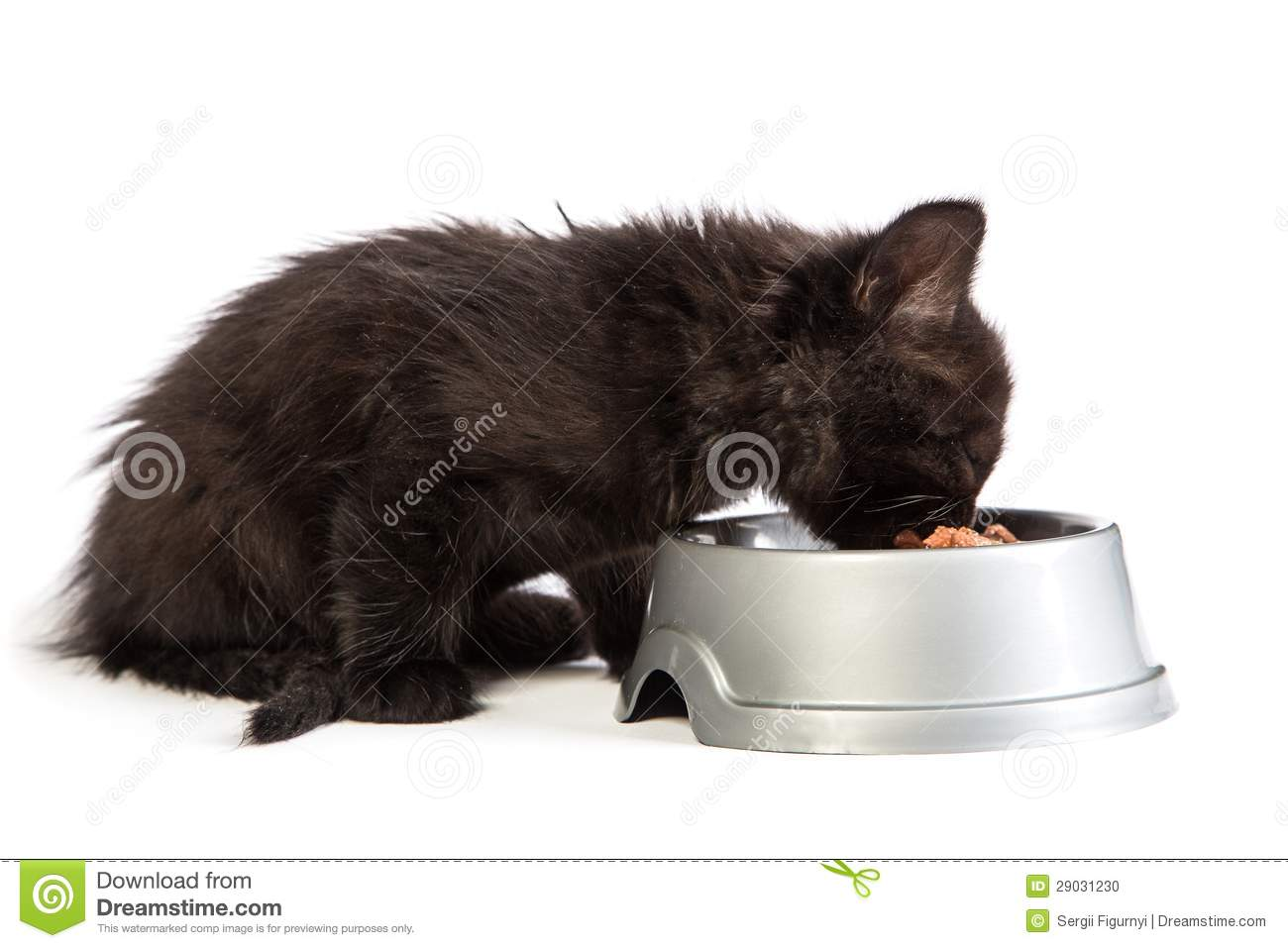 How To Feed A Cat Raw Food