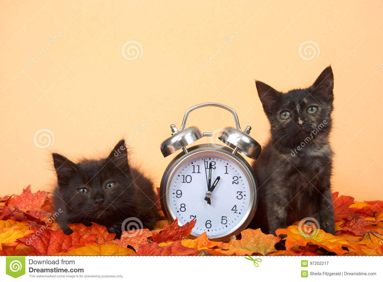 Black kittens in autumn leaves with clock, daylight savings concept