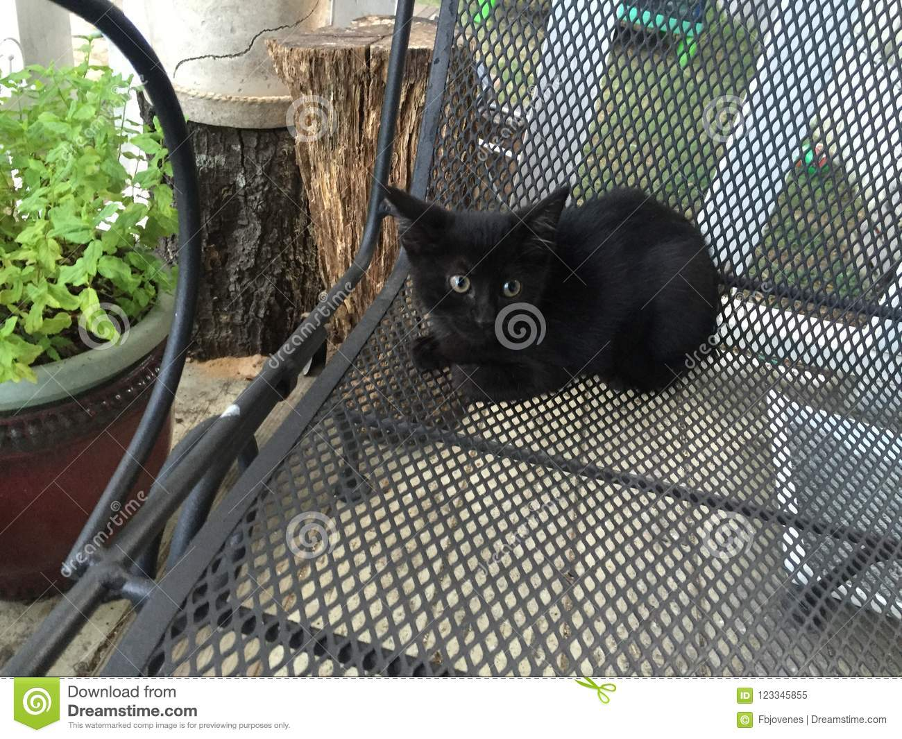 Black kitty just waiting for halloween