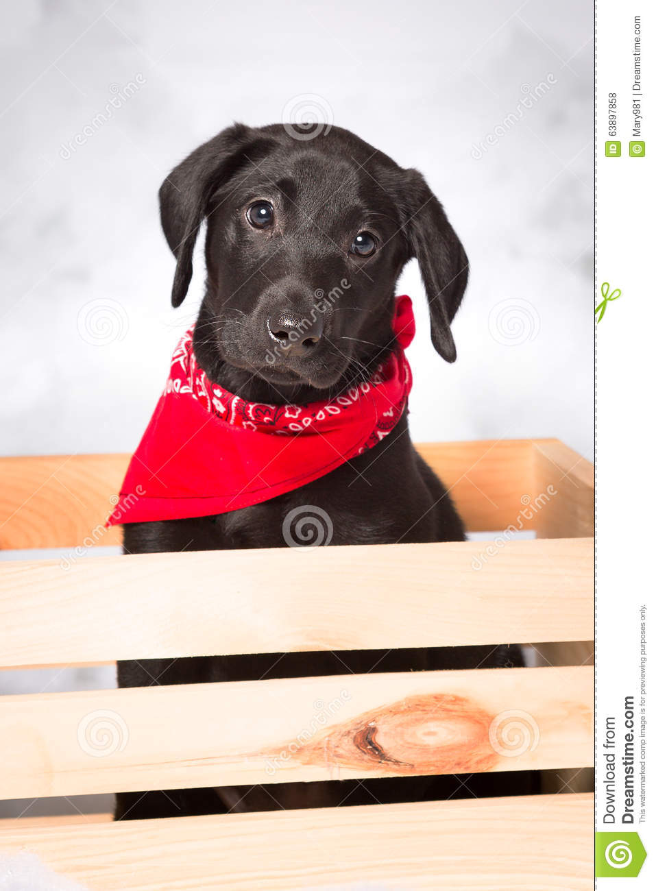 Black Lab Puppy In A Wooden Crate Stock Photo