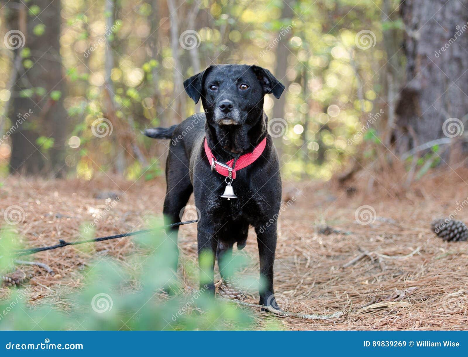 Red Collar Dog Adoption