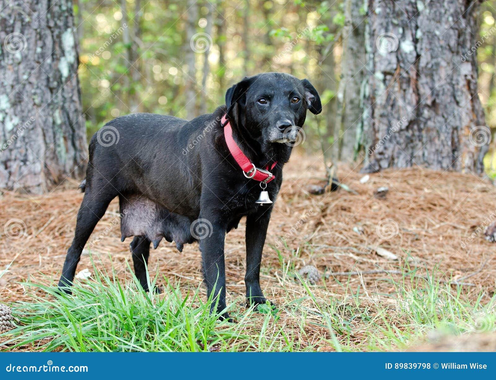Dog Walking In Walton County
