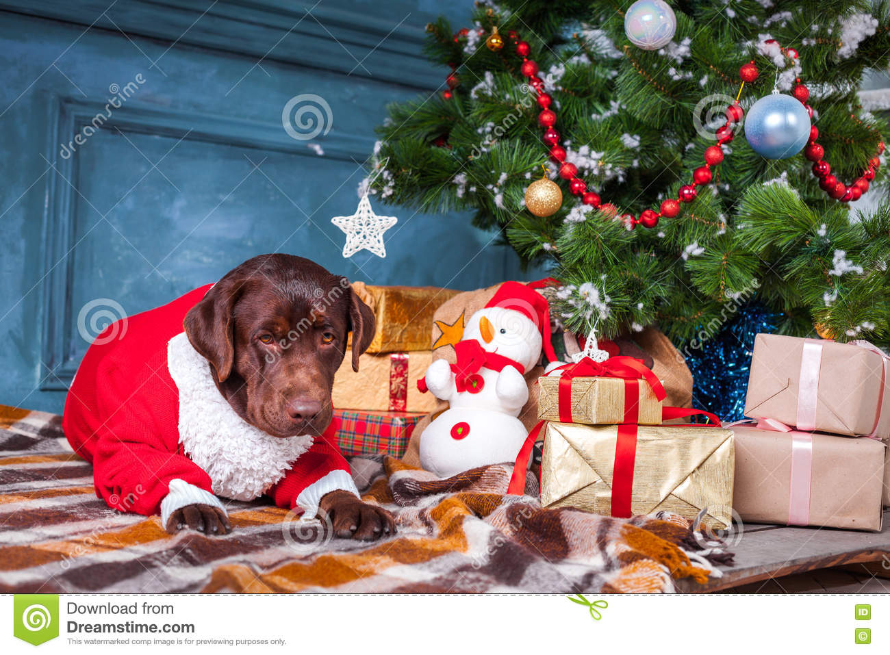 download the black labrador retriever sitting with gifts on christmas decorations background stock image image - Black Lab Christmas Decor