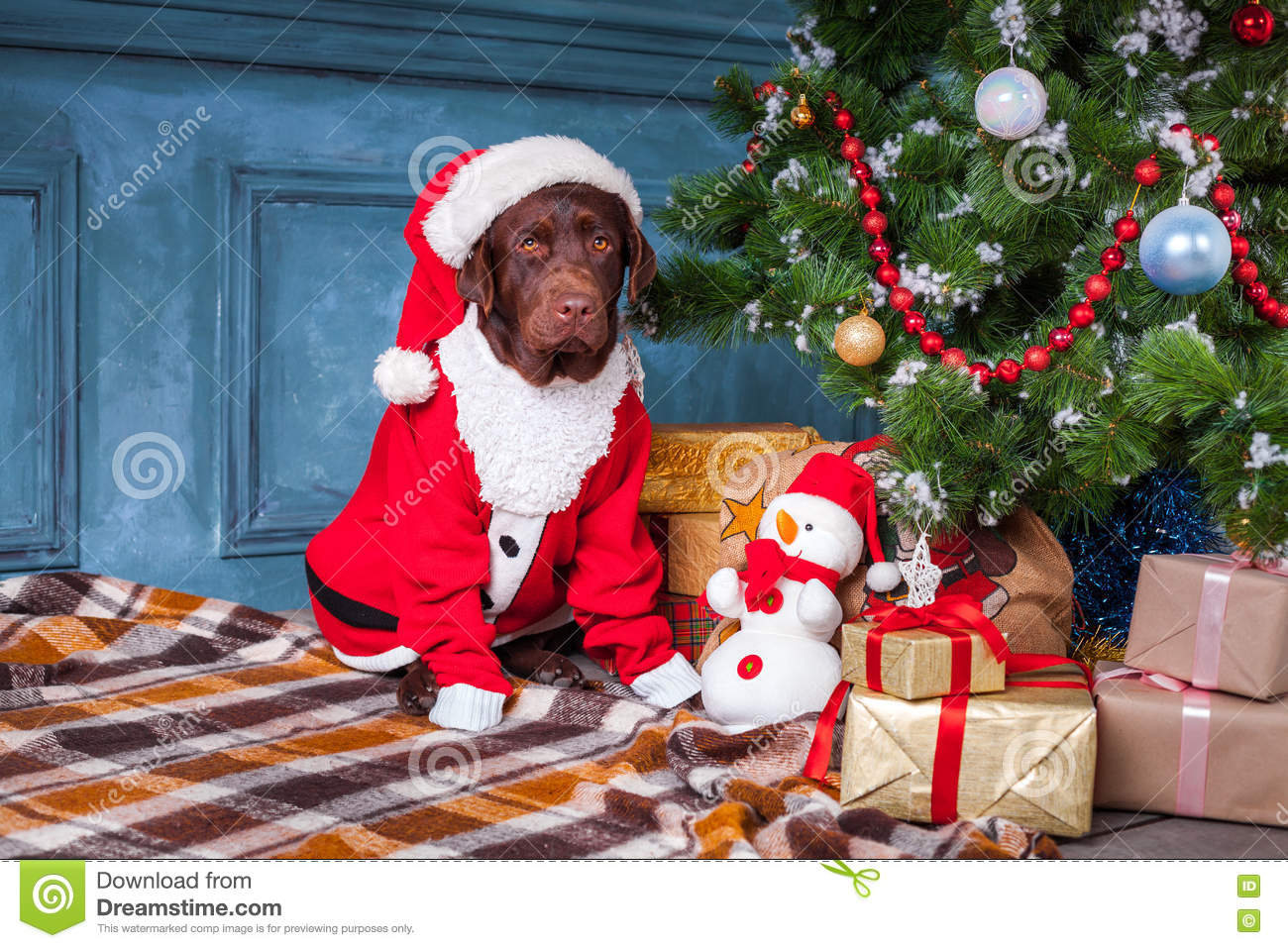 the black labrador retriever sitting with gifts on christmas decorations background