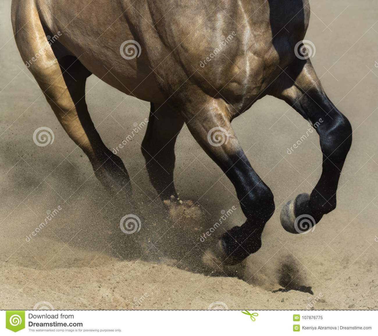 7 439 Black Running Horse Photos Free Royalty Free Stock Photos From Dreamstime