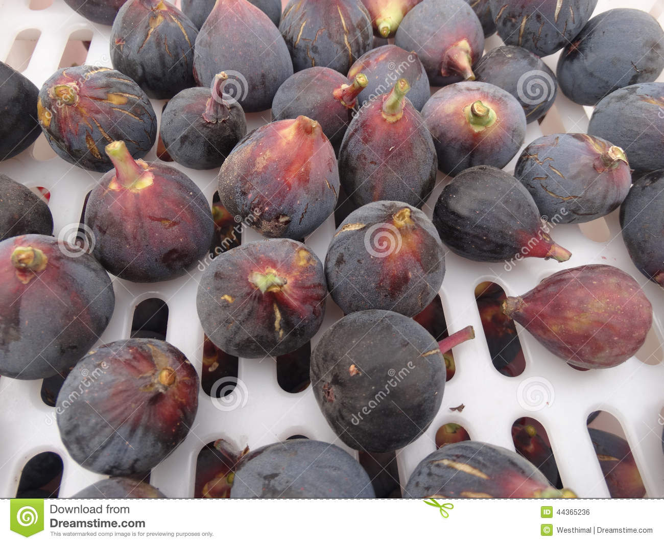 Black Mission Fig, Ficus carica  Mission