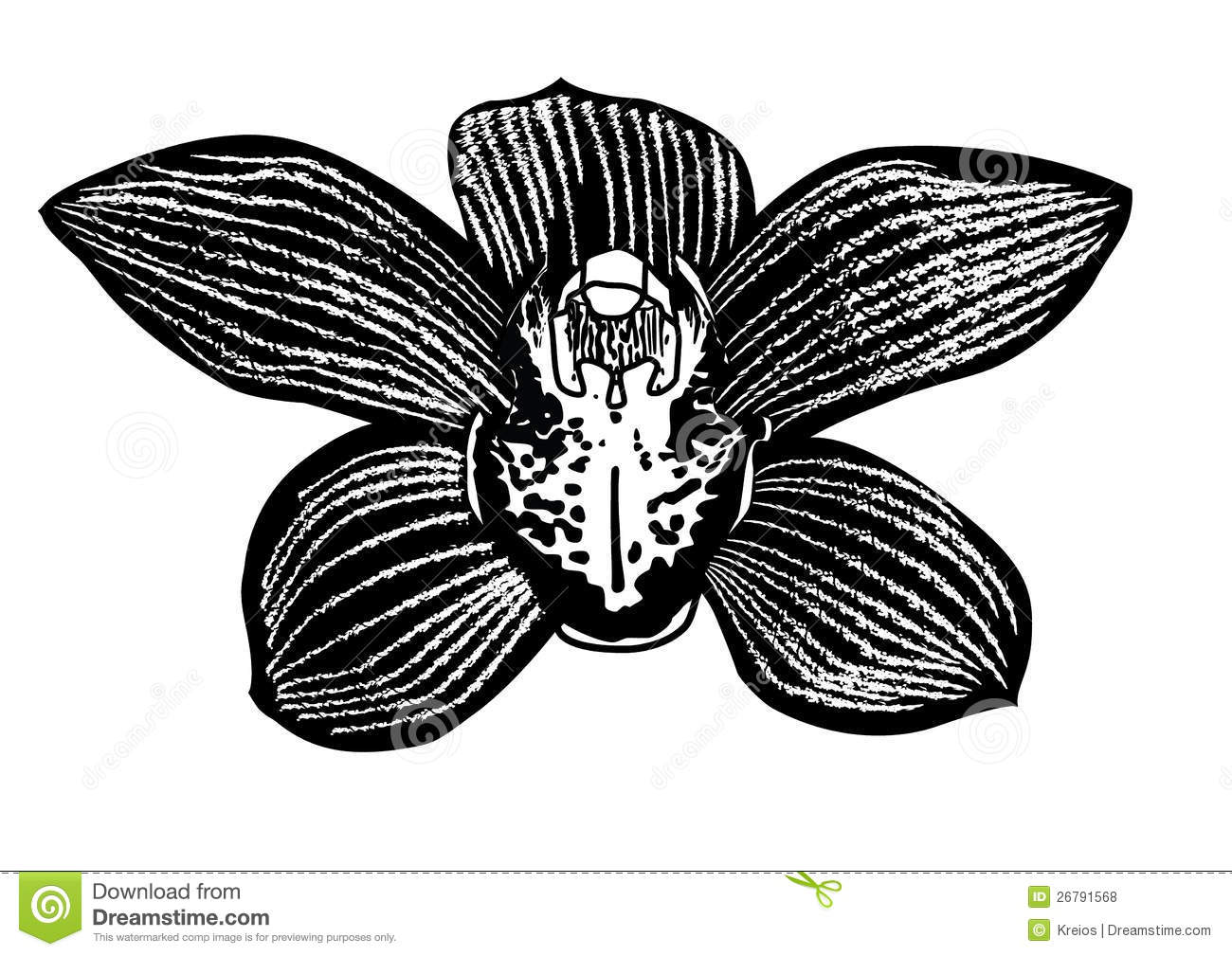 Black Orchid Flower Royalty Free Stock Photos - Image ...