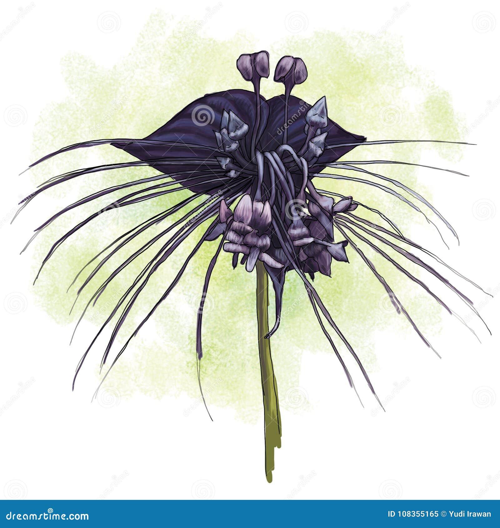 Unduh 470 Koleksi Gambar Bunga Gelap Terang Hd Gratid Gambar Bunga