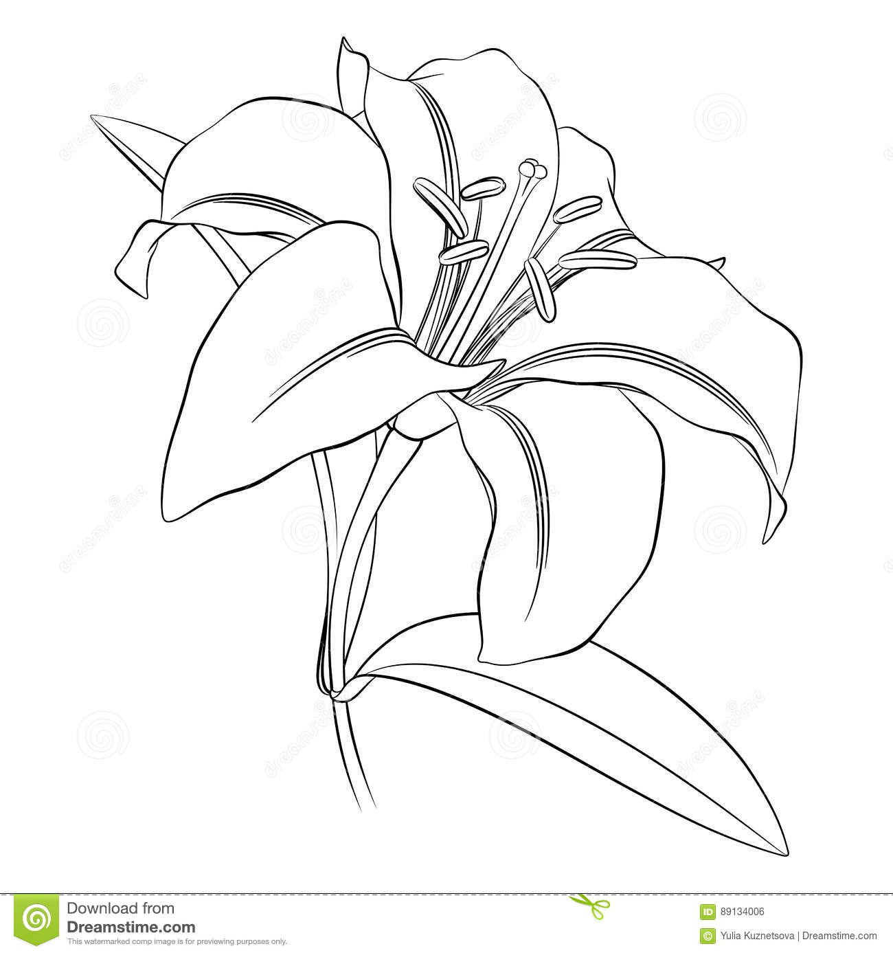 Black outline of a lily flower on a white background stock vector black outline of a lily flower on a white background izmirmasajfo