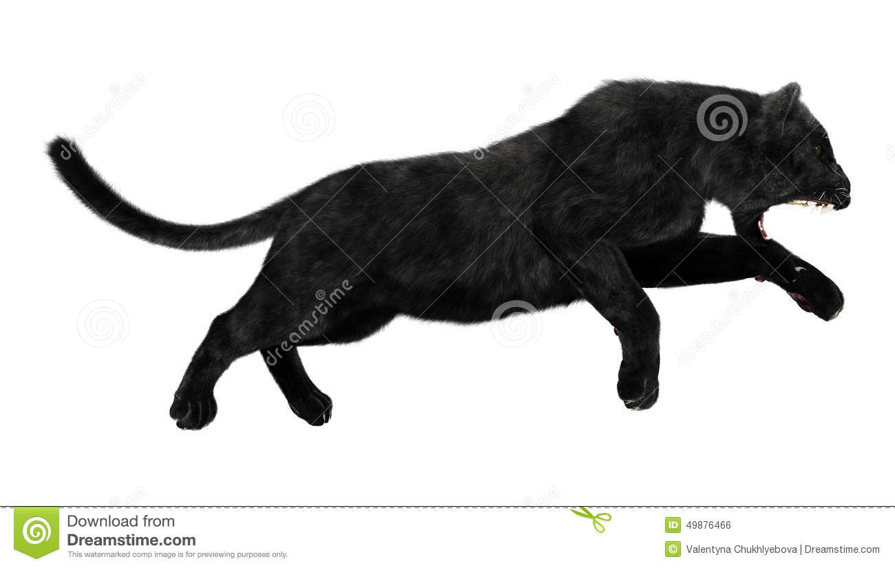Real Black Panther Jumping
