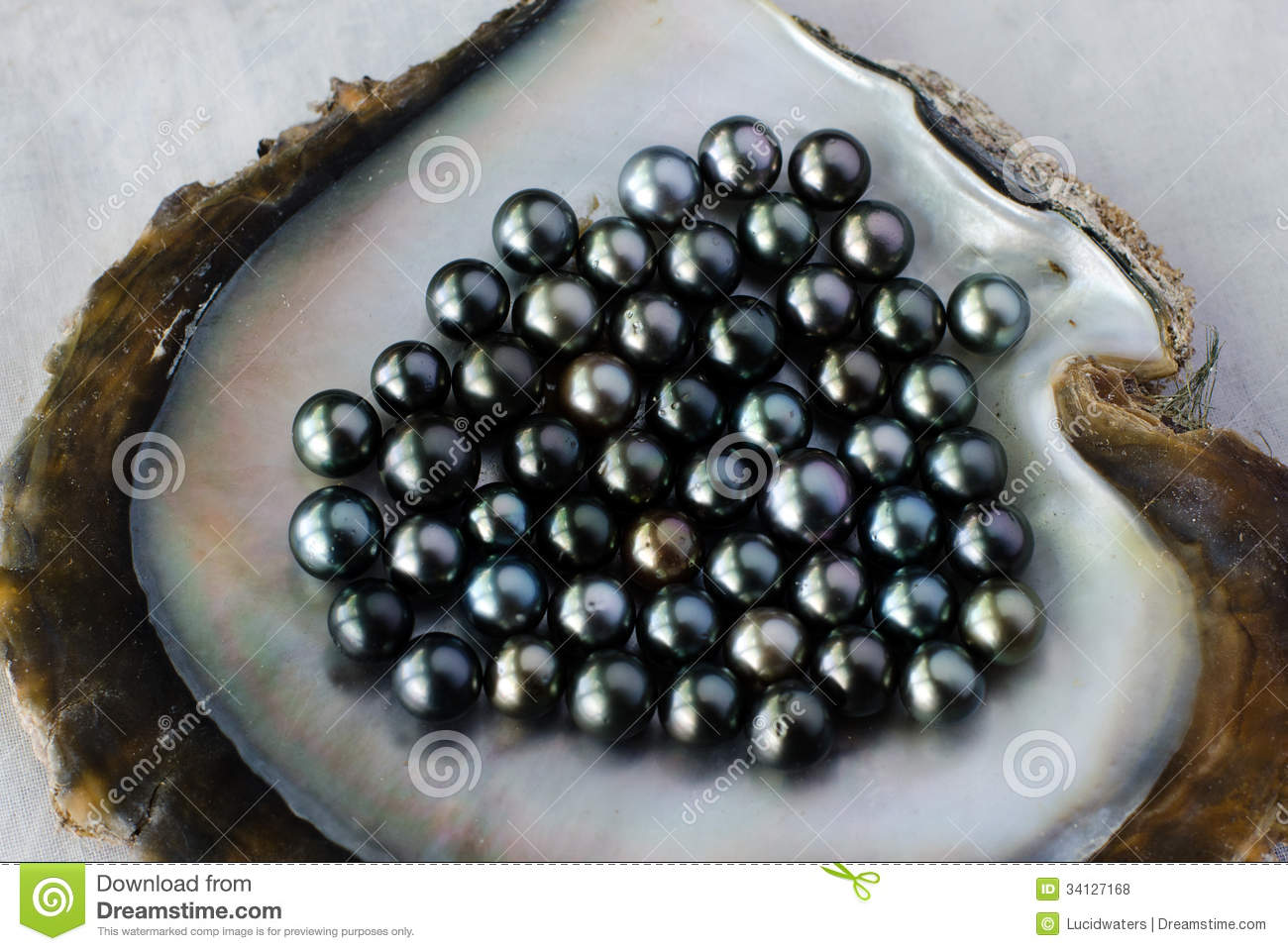 sorting authority pearls pearl islands cook black