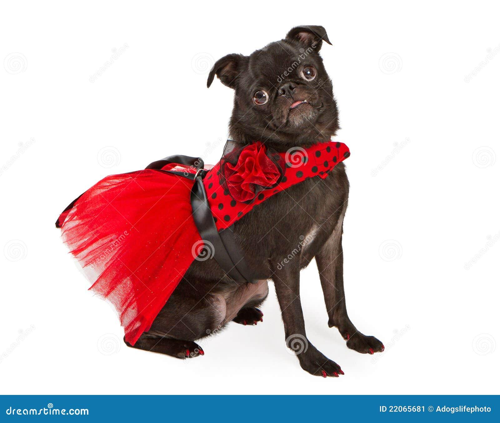 Pug Dog Christmas Pictures