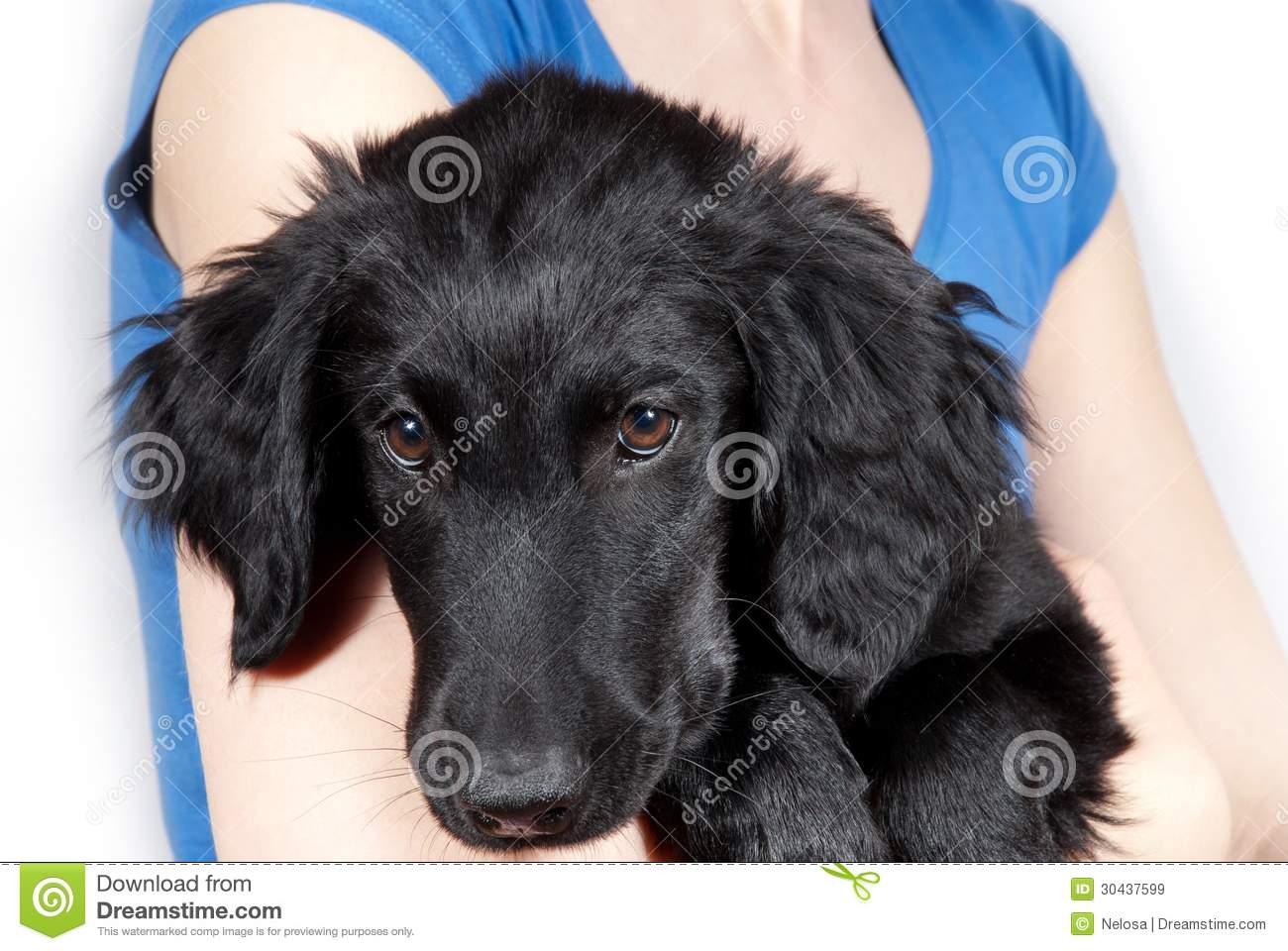 black coated retriever coloring pages - photo#13