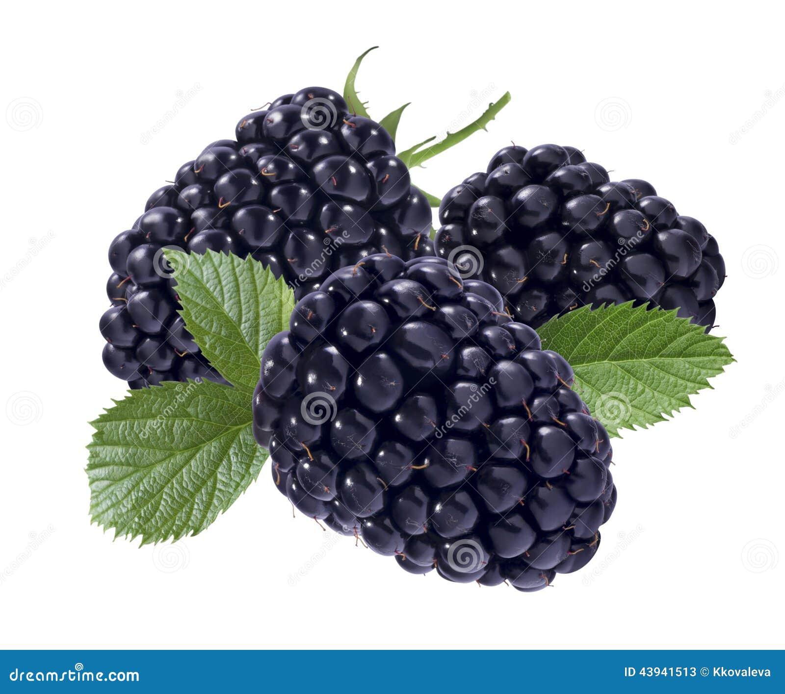 Black Raspberry black raspberry isolated on white background stock ...