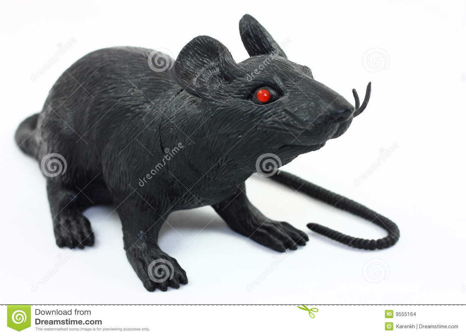 White rat with black eyes - photo#19