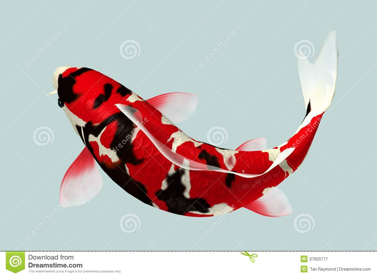 Black and red koi fish stock image image of decoration for Red and white koi