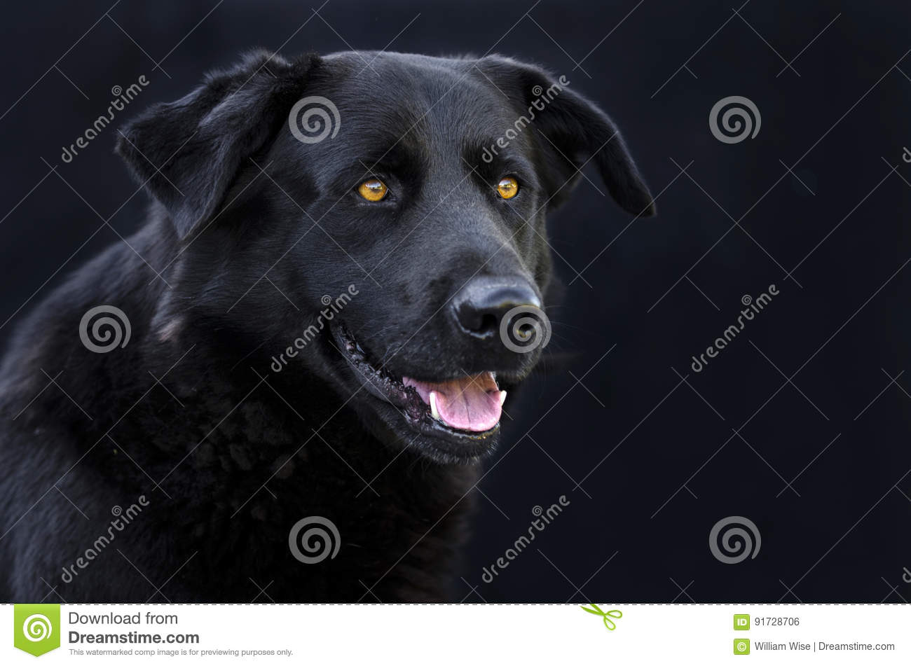 Best Time To Breed A Male Dog