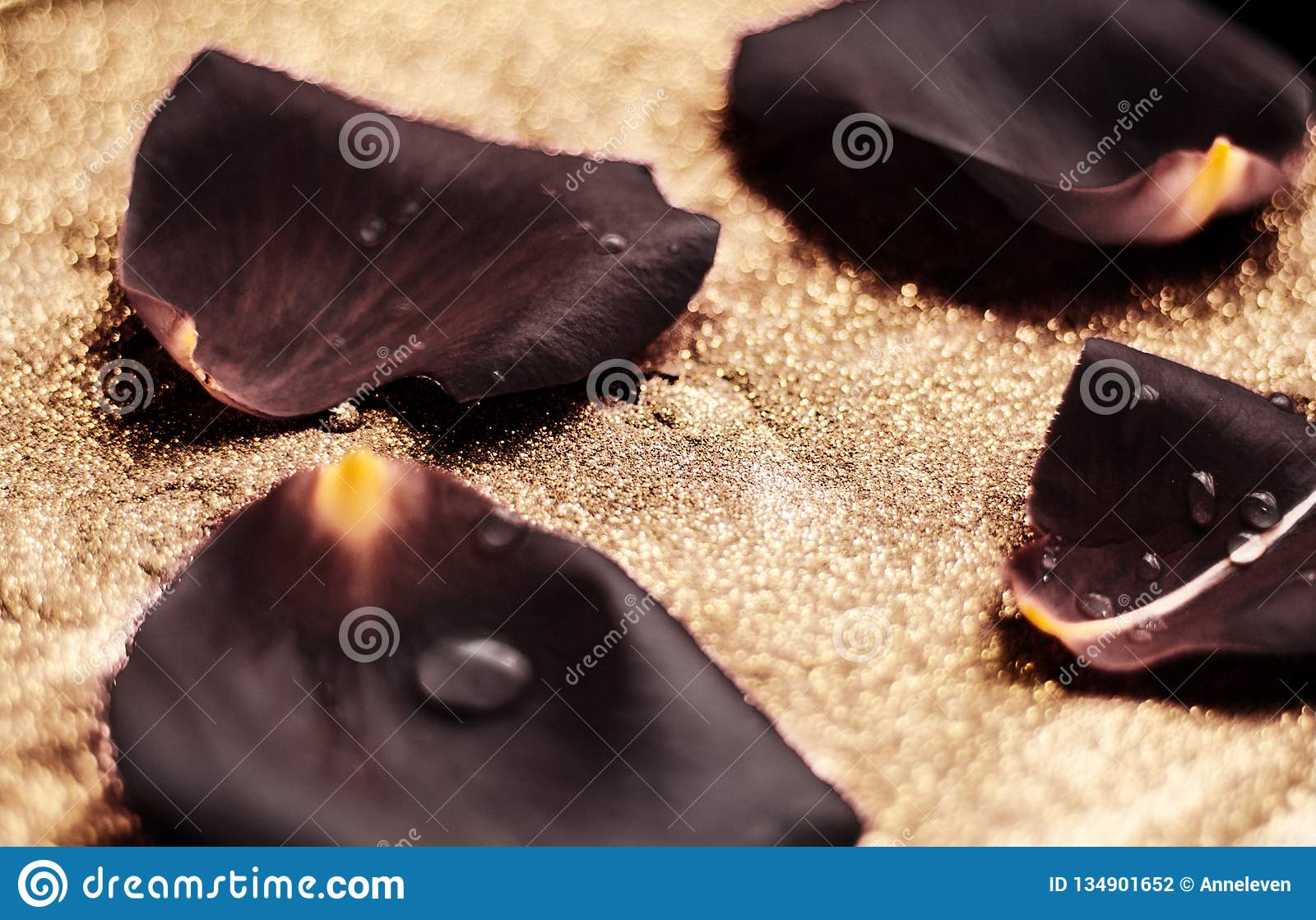 black rose flower petals - wedding, holiday and floral garden styled concept