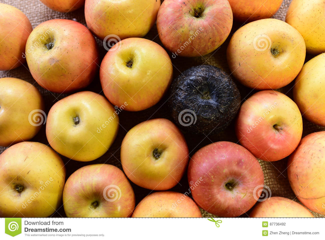 Black rotten and fresh apples