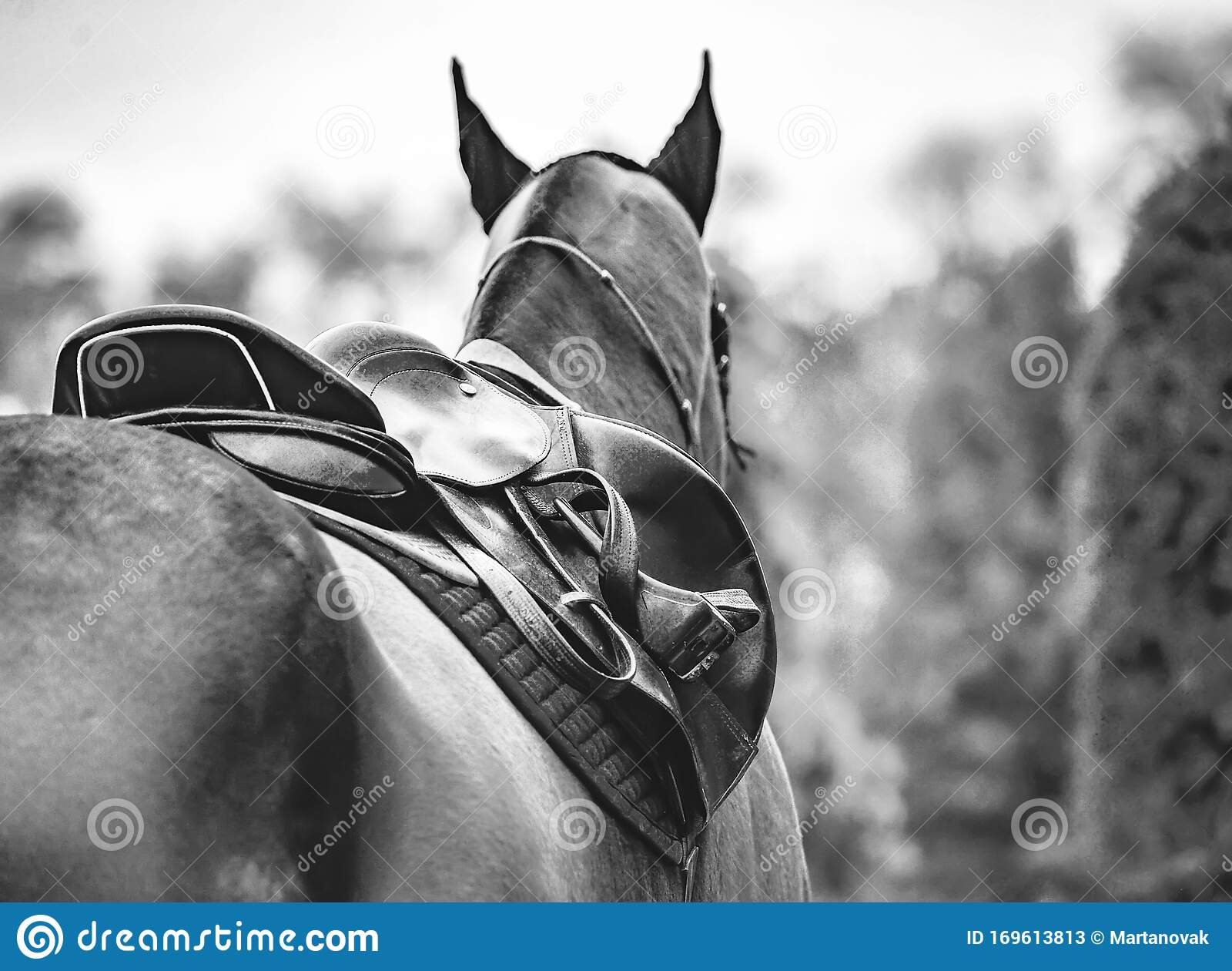 Black Horse Leather Saddle Stock Image Image Of Competition 169613813
