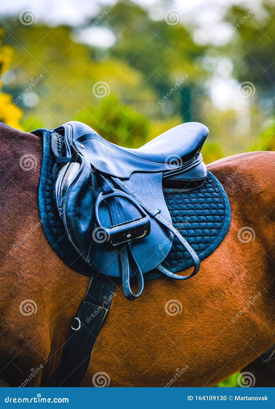 Black Horse Leather Saddle Stock Photo Image Of Equine 164109130
