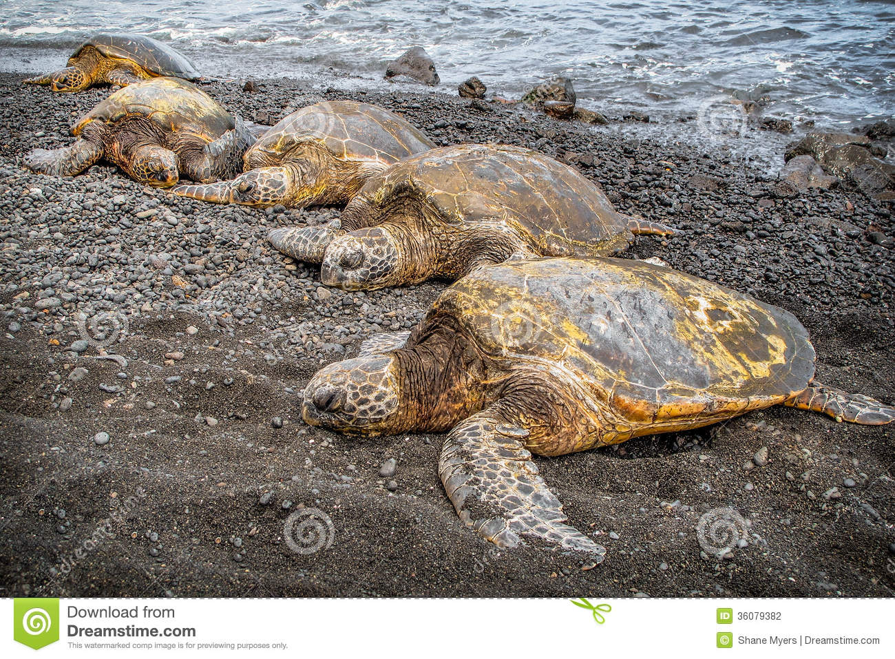 Big Island Hawaii Turtles