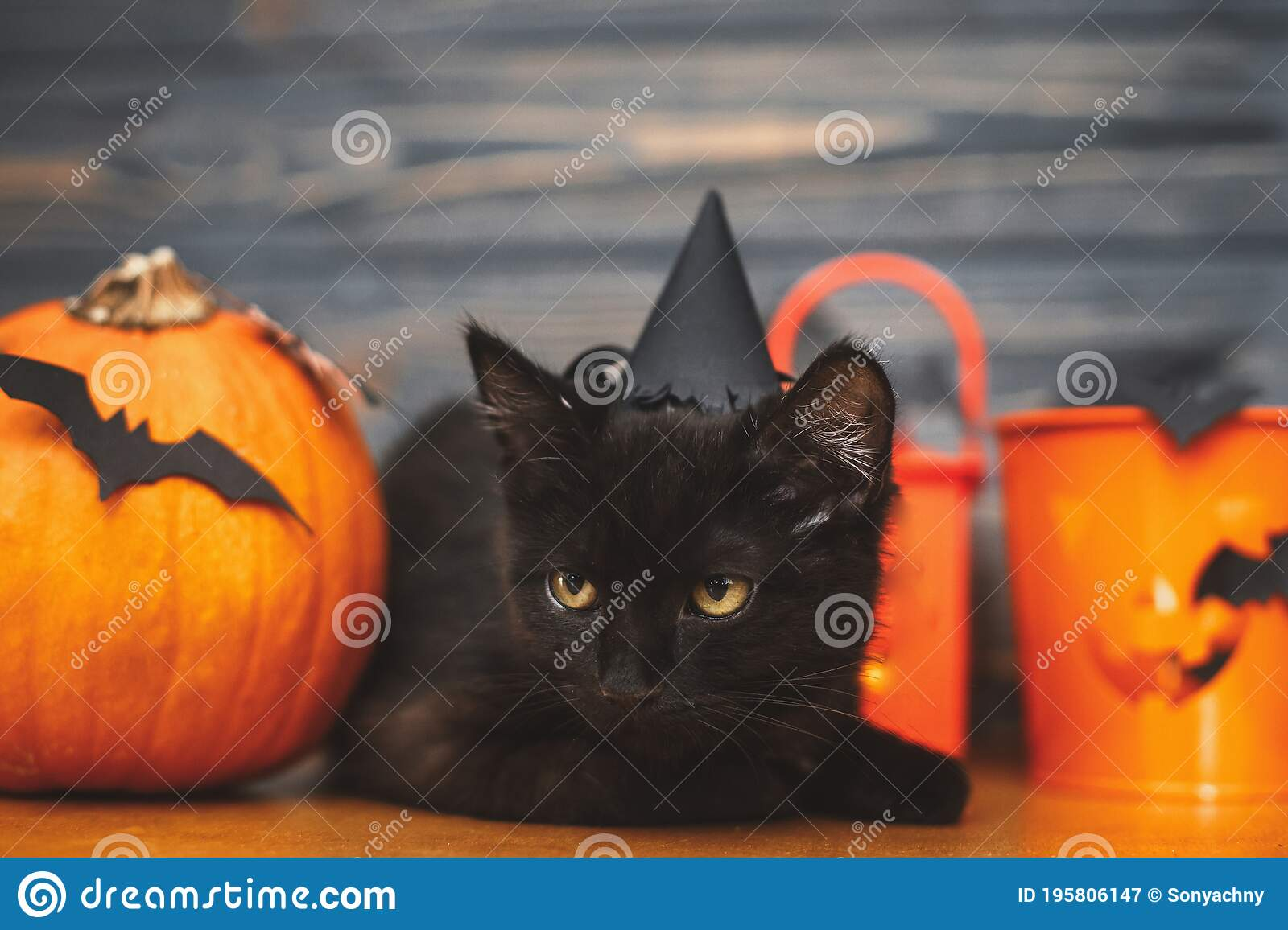 Black Scary Cat And Pumpkin Jack O Lantern Pail And Bats On Dark Wooden Background Happy Halloween Black Emotional Kitten Stock Image Image Of Animal Fall 195806147