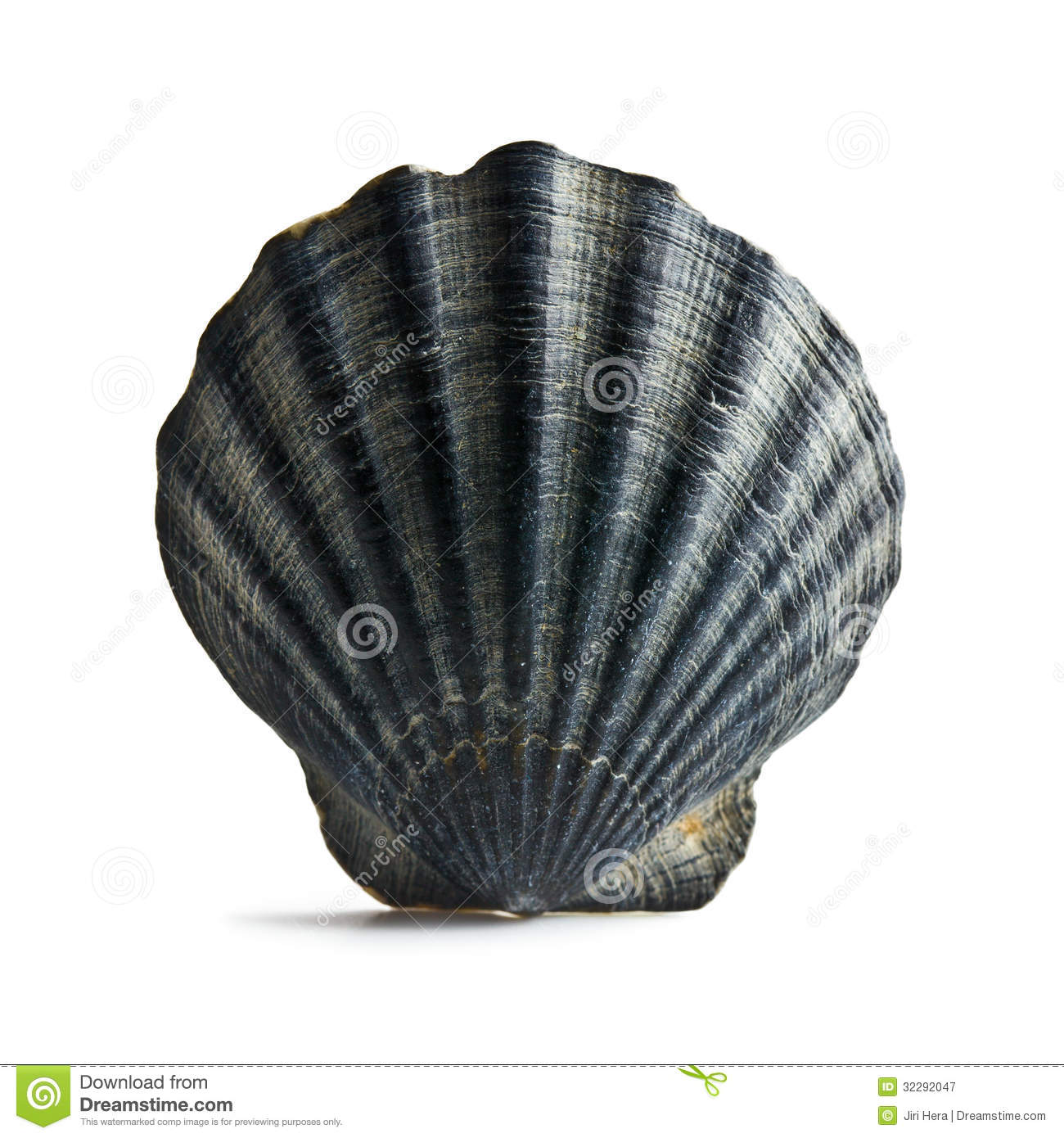 Black Sea Shell Royalty Free Stock Photography - Image: 32292047
