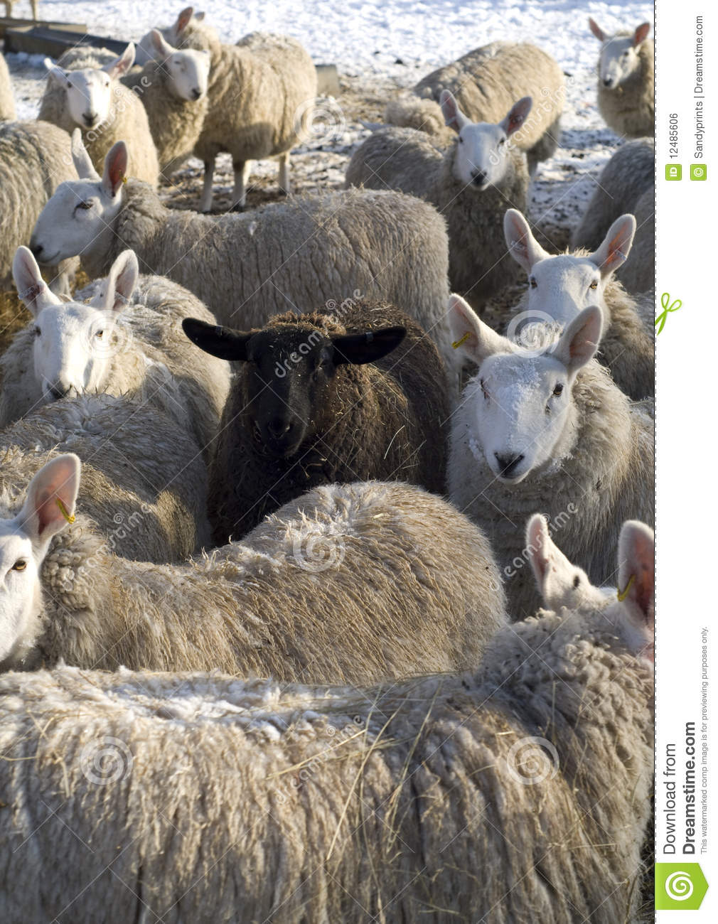 The black sheep of the flock.