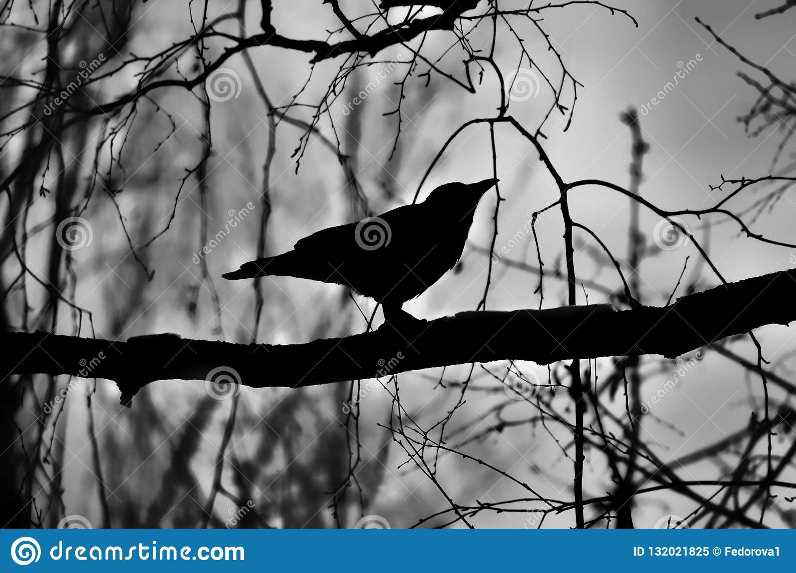Black Silhouette Of A Crow On A Branch Stock Image - Image ...
